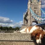 Milo london